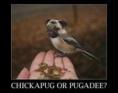 SALE - Chickapug or Pugadee with text - 8x10 Print