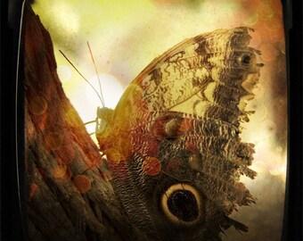 Basking Butterfly 5x5 Print