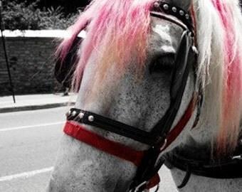 Punk Horse - 4x6 Print