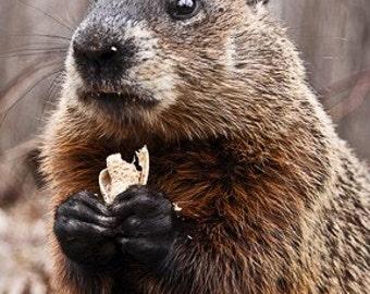 4x6 Print - Monsieur Marmot
