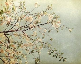 Magnolia Tree Photo - Springtime Art - Pastel Pink - Spring Decor - Dreamy - Soft Blue - Romantic Home Decor - Nursery - Flowering Tree