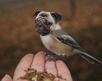 Funny Animal Photography - Half Bird Half Dog Print - Pug Dog - Chickadee - Bird Body - Pug Face - Collage Art - 4x6 Print
