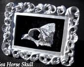 Real Seahorse Skull -  Black Seguin Shadow Box - Wall Hanging