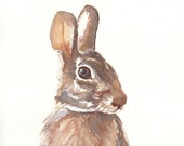 Portrait Of A Hare - O.R.I.G.I.N.A.L Watercolour Painting - 8x10
