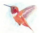 ORIGINAL Bird Watercolor Painting - Hummingbird 8x10