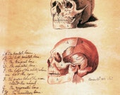 18x24 Vintage Anatomy. human skull with text poster 082