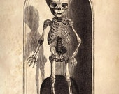 Vintage Anatomy Reproduction Print. Child's Skeleton Scientific Chart Educational Diagram Poster Biology Human Body - CP114