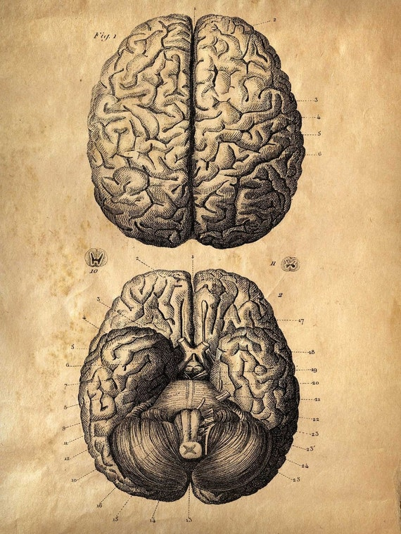 18x24 Vintage Anatomy. Brains poster. Human Body. Zombies. Horror. Science -002
