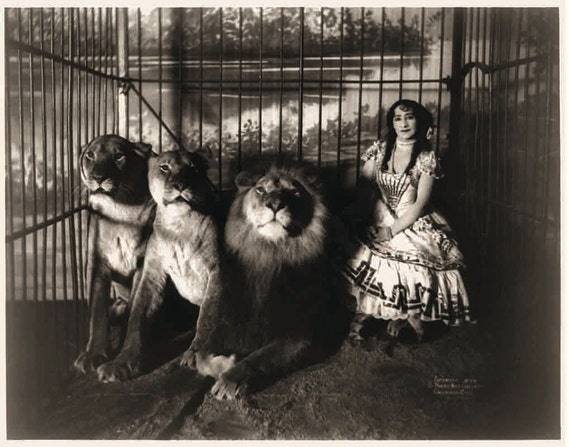 Adjie the Lion Tamer. 11x14 Vintage Circus Photograph Reproduction black and white. circa 1899. - 202