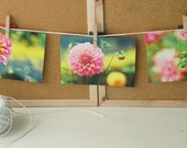 Dahlia Whispers- Set of 3 Postcards