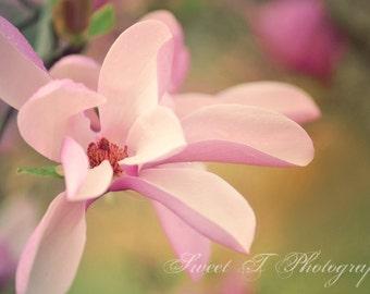 "Fine Art Photograph 8x10 ""The Tulip Tree"""