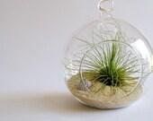 Surf bubble terrarium kit by terradctl