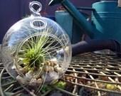 Hanging glass terrarium pebble beach by terradctl