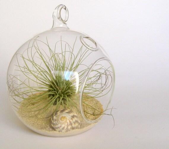 Sea urchin airplant terrarium by terradctl