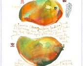 Mango - Original watercolor painting - Botanical plate