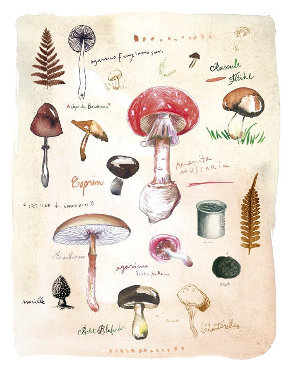 Art for kitchen - Mushrooms poster - Fungi botanical plate - 11X14 Food art print