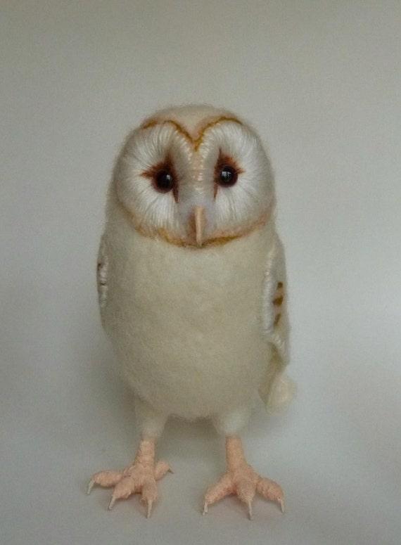 Baby Barn Owl 2