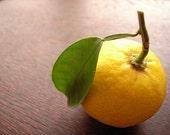 Bergamot and Yuzu Fruit Refill for Wool Dryer Balls