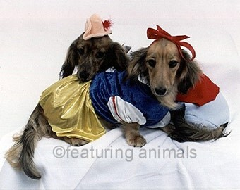 Our Fairy Tail - Halloween - Two Dachshunds in Love - Blank Notecard OR You Choose The Occasion - You Choose the Inscription