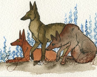 Trio of Wolves ACEO giclee print