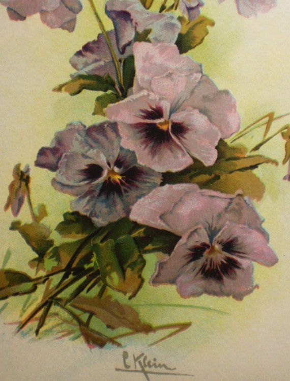 pale violet or lavender pansies, bunch, chromo - C. Klein (A)