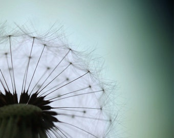 Download photo Dandelion wall art summer photography summer home decor Dandelion photo