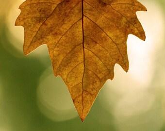 Digital download Autumn Leaf Photo yellow green tan photography wall art