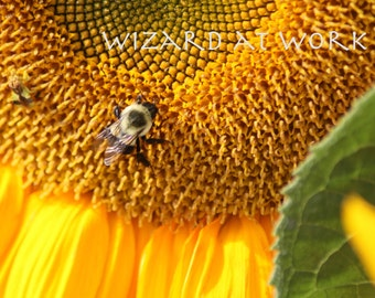 Bee on a Sunflower - Macro photography, bumblebee, flower, farmers market, yellow