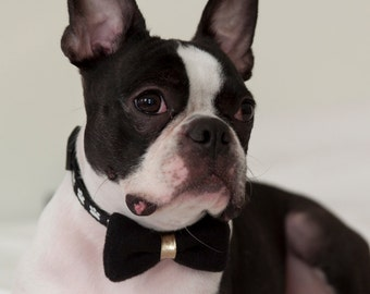 Dog Bow Tie Black with Gold Knot