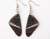 Real Butterfly Wing Earrings - Green Page Moth