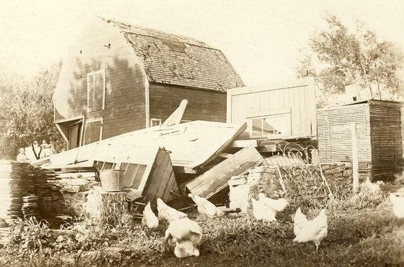 CHICKENS Outside BARN in RURAL Scene Photo Postcard Circa 1910