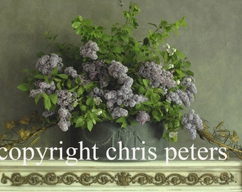 Photo Note card, flowers, lilacs, free shipping, chris peters, mementos of the journey
