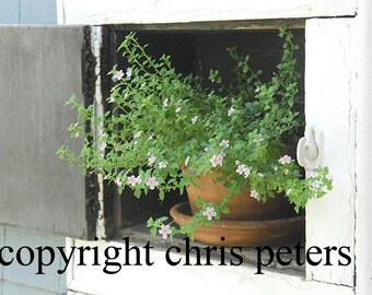 Photo Notecard, flower pot, free shipping, chris peters, mementos of the journey