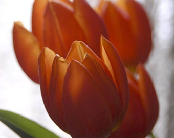 Photo note card flowers orange tulips free shipping chris peters mementos of the journey