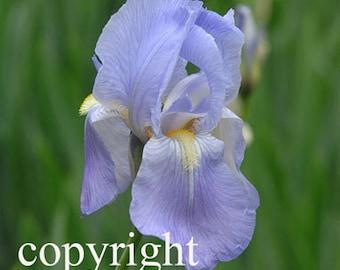 Photo Notecard purple iris flower free shipping chris peters mementos of the journey