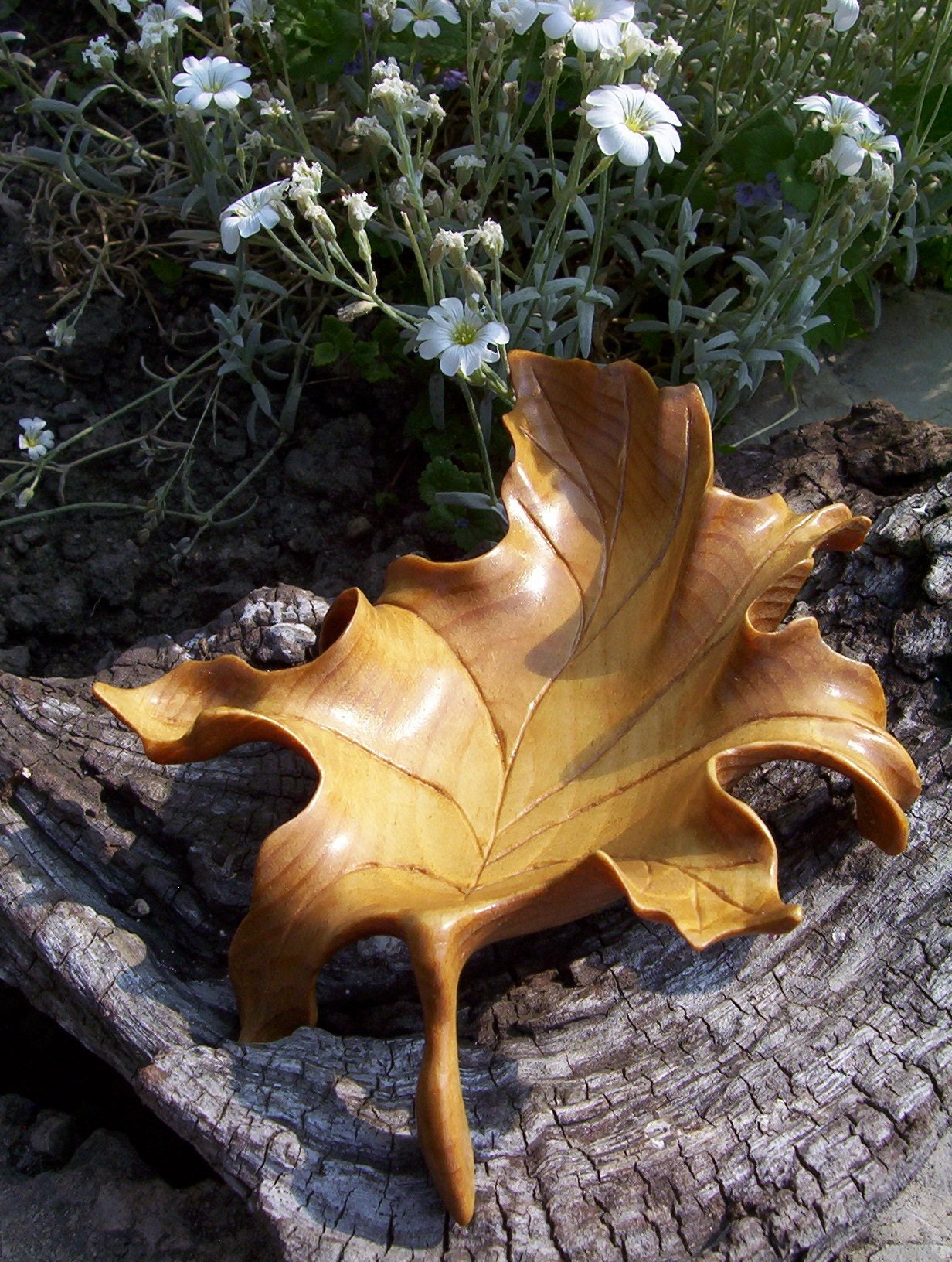 Carving with maple leaf bowl canary wood morel