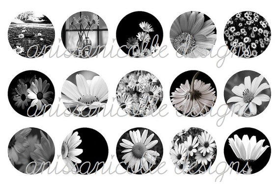 BLACK WHITE DAISIES 1 Inch Circle Bottle Cap Image Sheet