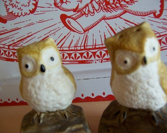 adorable owls  shakers