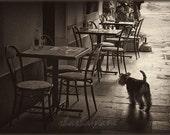 Espresso time - scottie dog needs coffee 5x7 Fine art sepia photo