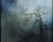 Moonlit meeting of the beauty and the beast - trees 12x12 fine art photography poster print, spooky blue