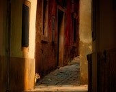 The cat patrol 12x12 fine art photography print, Venetian alleys, Slovenia