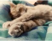 "Ginger cat photo - a sleeping cat's catnap dreams 8x12"" fine art photo print"