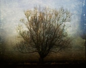 Dreams can grow in strange places, melancholy tree 8x8 art print