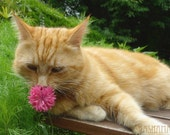 Take a moment to smell the flowers. Cat senses spring 5 x 7 photo