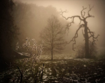 Misty, moody and haunting foggy, winter scene, frost & ice 5x7 art print