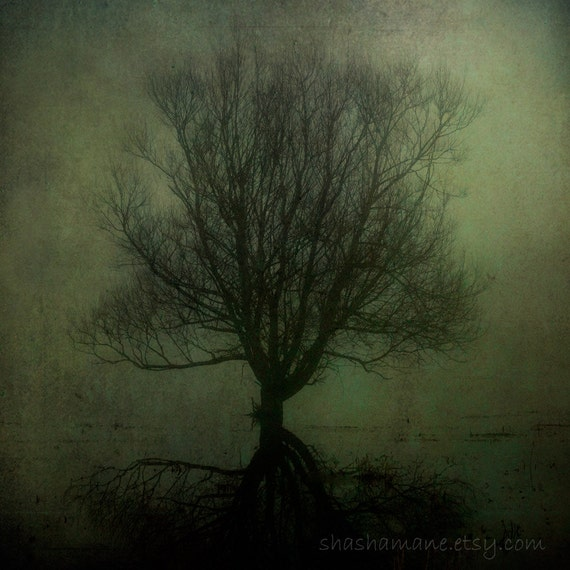 Inbetween dreams and reality, haunting, spooky, halloween, eerie, dark tree 6x6 art photo
