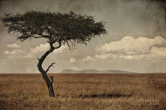 Timeless African Acacia Tree 8x12 fine art photo print