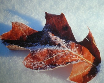 Vintage matted art photography of a fallen leaf on the snow