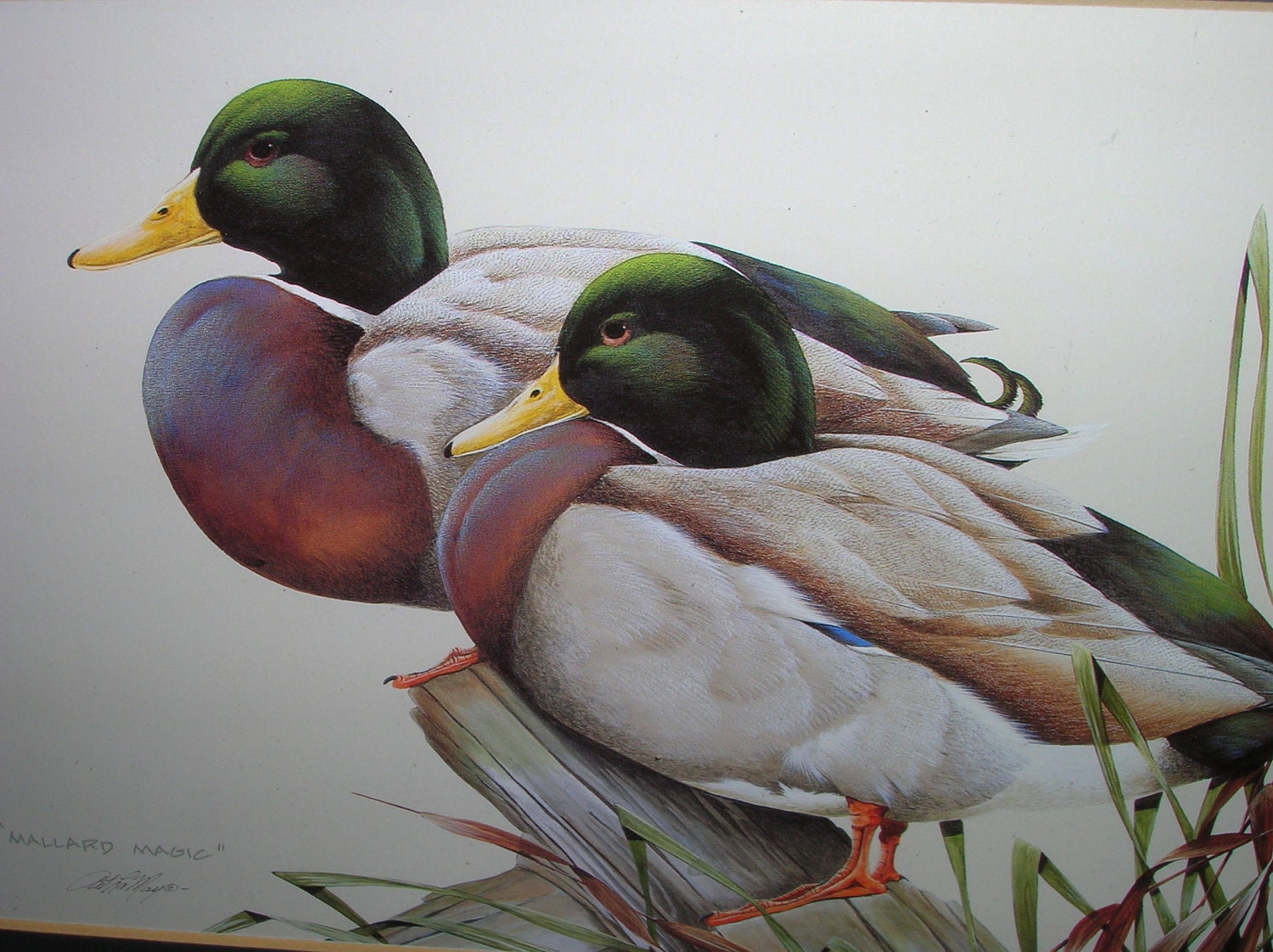 Framed Vintage Print Of Mallard Ducks
