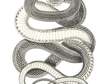 Curvy Snake vintage print Reproduction  year of the snake 2013  New Year